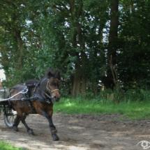 men en ruiterdag 3 foto Clemens Brughuis (68)